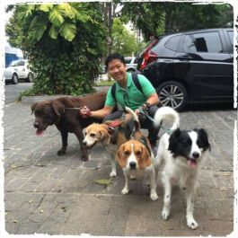 dog-walker-em-sao-paulo