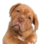 pet-shop-big-house-veterinaria-banho-tosa-caes-cachorros-logomarca