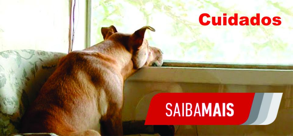 cuidados-caes-cachorros