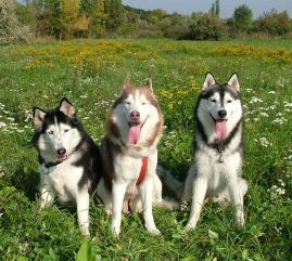 fotos-de-cachorros-caes-bonitos-imagens