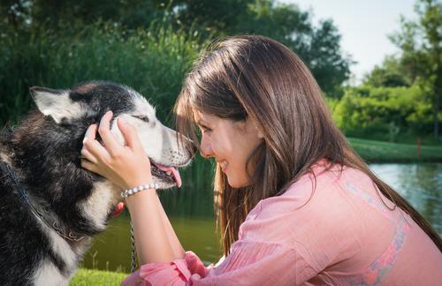adestradores de caes e cachorros