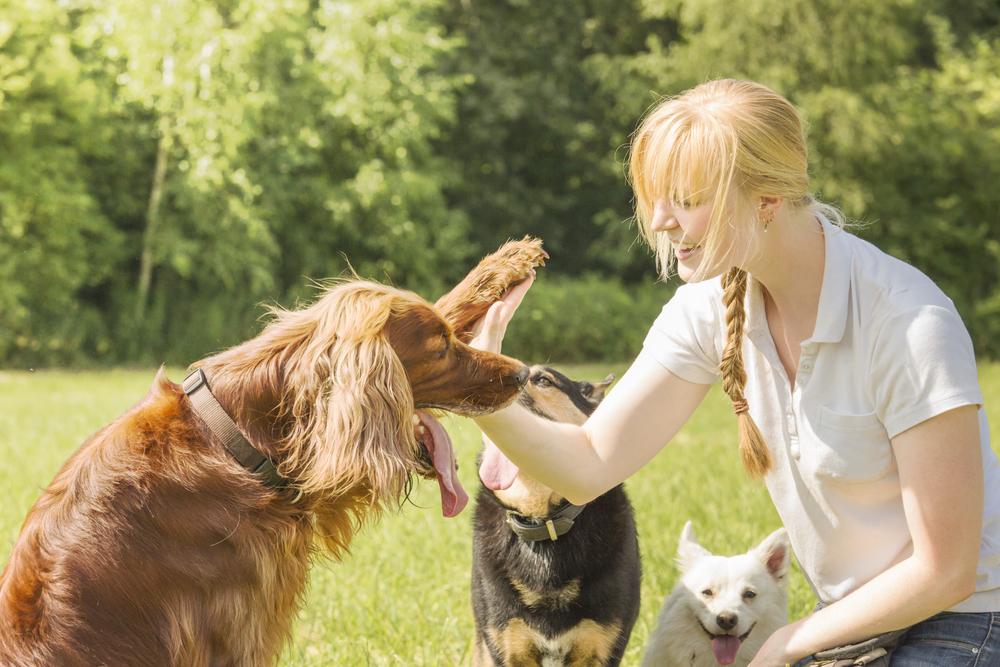passeadores-de-caes-cachorros-no-bairro-parque-ibirapuera-dogwalker-adestramento