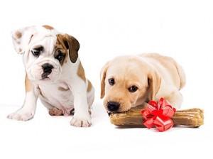 cachorro-cao-ciumentos-por-que-como-evitar-ciumes