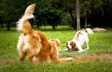 comportamento-ciumes-ciumento-caes-cachorros-adestrar-como-evitar