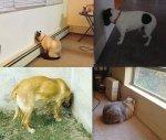 cachorro-gato-encostrando-pressionando-cabeca-parede-contra-fotos-imagens-okamix