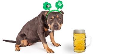 cachorros-caes-alcool-beber-proibido-faz-mal-www-okamix-com-br
