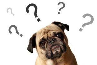 cachorros-caes-cao-inclinam-inclinar-cabeca-imagens-fotos