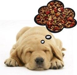 cachorros-caes-dogs-dreamming-sonhos-fotos-imagens-facebook-www-okamix-com-br