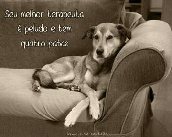 cachorros-caes-mensagens-facebook-hd-www-okamix-com-br