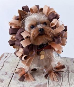 cachorros-mimados-caes-fotos-imagens-dominadores-www-okamix-com-br