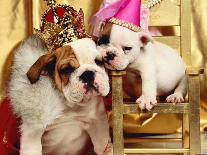 caes-cachorros-mimados-imagens-fotos-o-que-fazer-corrigir-www-okamix-com-br