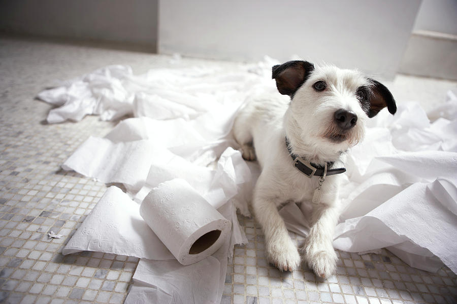como-punir-o-meu-cao-cachorro-punicao-dicas-treinamento-broncas-castigos