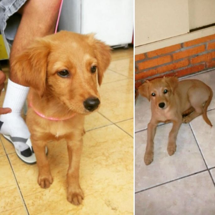 doacao-ong-caes-cachorros-vila-guilherme-sao-paulo-sp-www-okamix-com-br