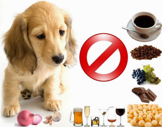 o-que-os-caes-cachorros-nao-devem-podem-comer-proibido-comidas-caseiras-racoes-comercial-industrial-okamix