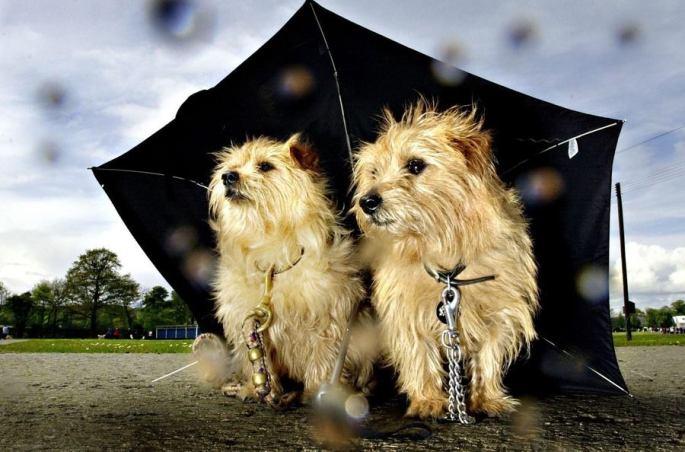 passeios-dias-chuva-chuvosos-caes-cachorro-cao-posso-passear-dicas-cuidados-o-que-fazer
