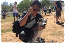 adestramento-cachorro-husky-siberiano-1