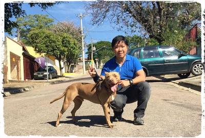 adestramento-cachorro-pit-bull-1