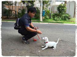 adestramento-de-caes-cachorros