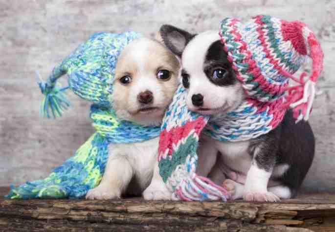 cachorro-caes-frio-sentem-tosar-banho-roupas-fotos-imagens