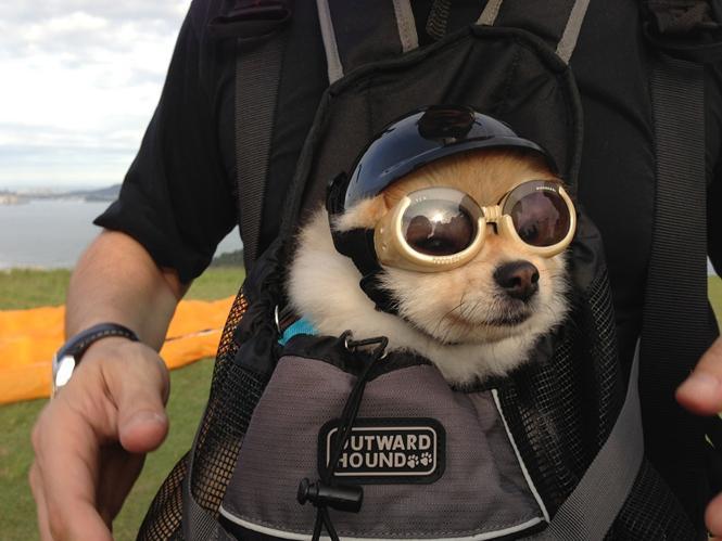 cachorro-cao-caes-nocao-do-perigo-perigoso-nao-tem-medo-www-okamix-com-br