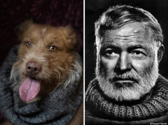 cachorro-fantasiado-dono-fotos