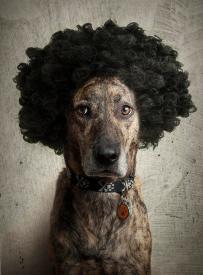 cachorro-personalidade-fotos-imagens-peruca-engracado-www-okamix-com-br