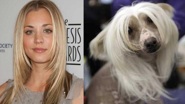 cachorros-com-perucas-artistas