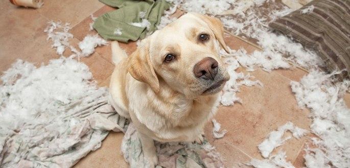 cachorros-latindo-sozinhos-em-casa-latidos