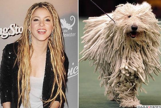 cachorros-parecidos-com-artistas