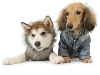 cachorros-roupa-frio-roupinhas-inverno-fotos-imagens