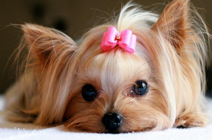 caes-cachorros-doentes-hospital-veterinarios-imagens-fotos