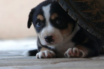 cao-cachorro-com-medo-nocao-perigo-perigoso-fotos-imagens-hd-www-okamix-com-br