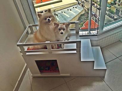casinhas-para-cachorros-cao-caes-em-sao-paulo-sp