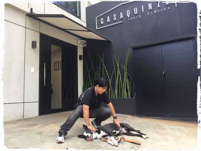 consultoria-comportamental-caes-cachorros-sao-paulo-sp