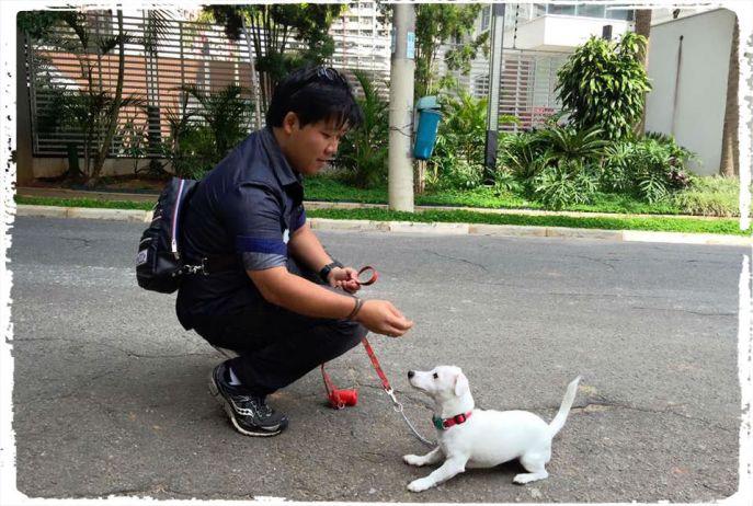 consultoria-comportamental-para-caes-cachorros-consultor