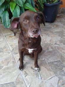 doação-de-cachorro-cao-caes-vira-lata-em-sao-paulo