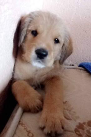 doacoes-de-cachorros-vira-lata-em-sao-paulo