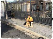 dog-walker-em-sao-paulo-fotos-imagens