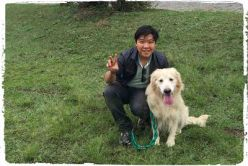 dog-walker-golden-retriever-fotos1