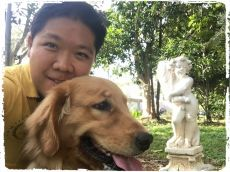 dog-walker-golden-retriever