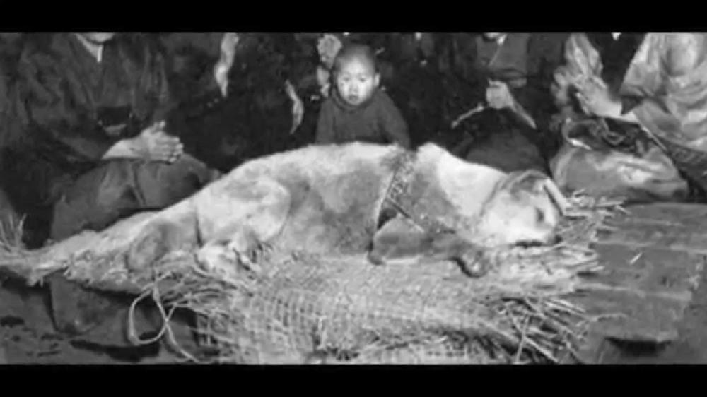 enterro-morto-fotos-imagens-hachiko-japao