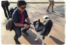 fotos-adestramento-husky-siberiano1