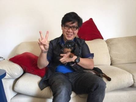 fotos-de-adestramento-inteligente-de-caes-cachorros-reabilitacao