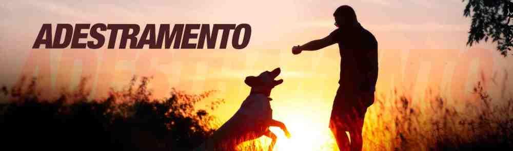 fotos-imagens-adestradores-adestramento-de-caes-cachorros