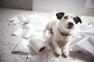 o-que-os-caes-cachorros-fazem-sozinho-casa-agitados-bagunca