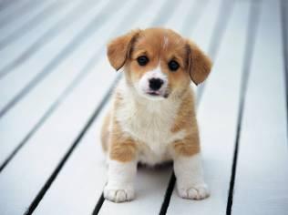 cachorro-filhote-fotos-imagem