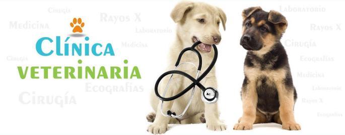 clinica-veterinaria