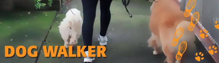 dog-walker-passeios-caes-cachorros