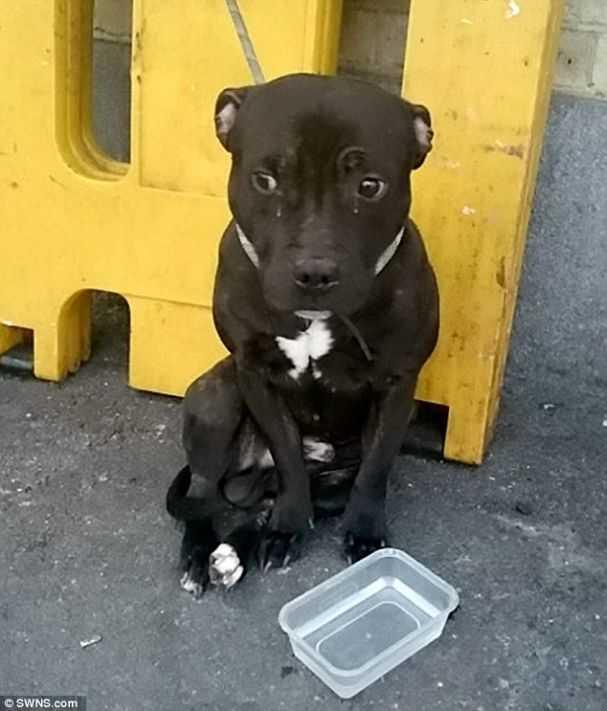 foto-cachorro-abandonado-inglaterra-tigela-agua