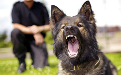 fotos-ataques-cachorros-caes-c